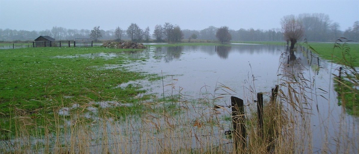 hoog water in weiland